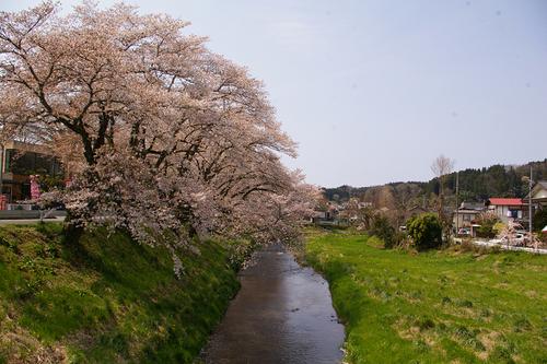 石川町のさくら祭り_b0283432_215592.jpg