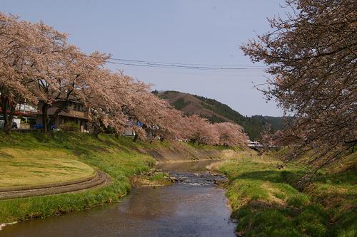 石川町のさくら祭り_b0283432_2163664.jpg