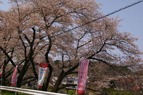 石川町のさくら祭り_b0283432_218211.jpg
