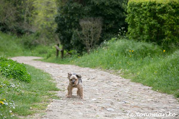 バブーのパリの郊外散歩とGWの「ぼわっと」営業_c0024345_04583715.jpg