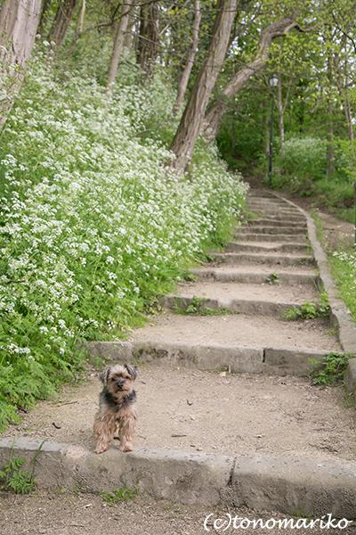 バブーのパリの郊外散歩とGWの「ぼわっと」営業_c0024345_04583786.jpg