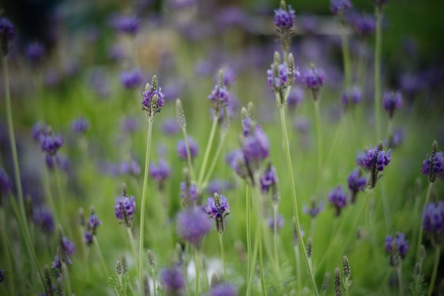 azul..púrpura..._f0057849_20505650.jpg