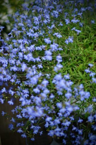 azul..púrpura..._f0057849_20594168.jpg