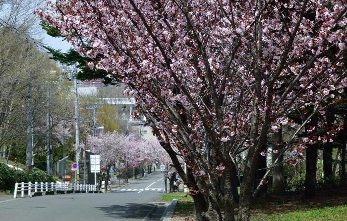 雪のち桜_e0213363_18152982.jpg