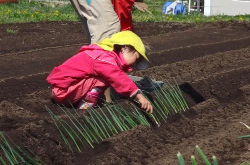 長ネギ苗を植える。_c0110869_10353642.jpg