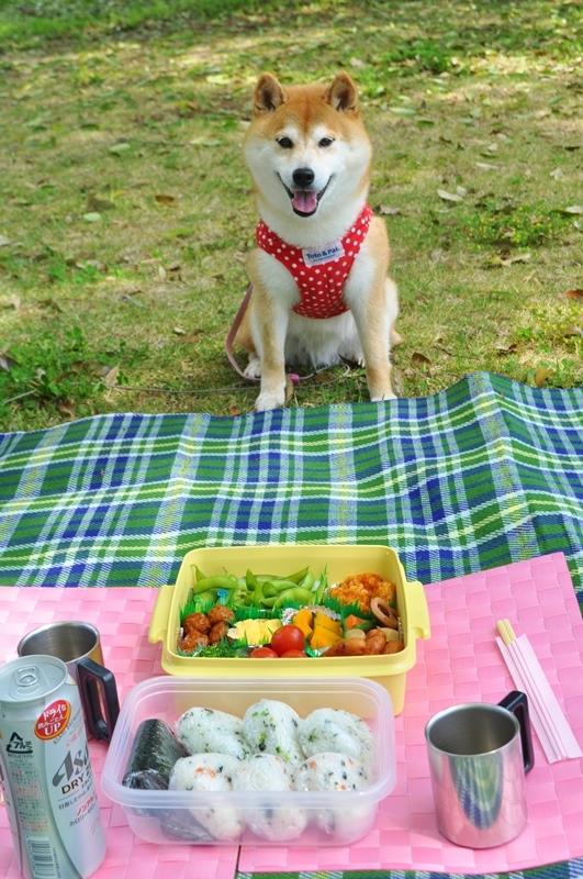 かぼちゃんとピクニック_a0126590_16254183.jpg