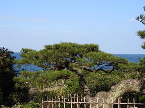 ワンと初島へ_a0218499_1450326.jpg