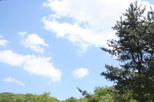 今日もいいお天気…風は強い_e0179508_13463390.jpg