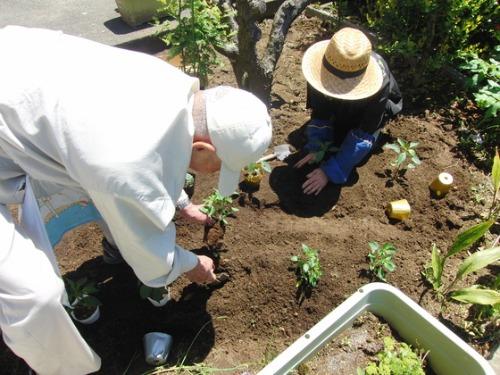 緑のカーテン作り & やと菜園開始♪_e0222340_1547255.jpg