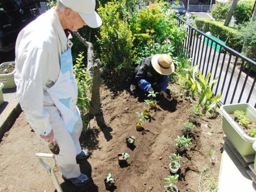 緑のカーテン作り & やと菜園開始♪_e0222340_15475676.jpg