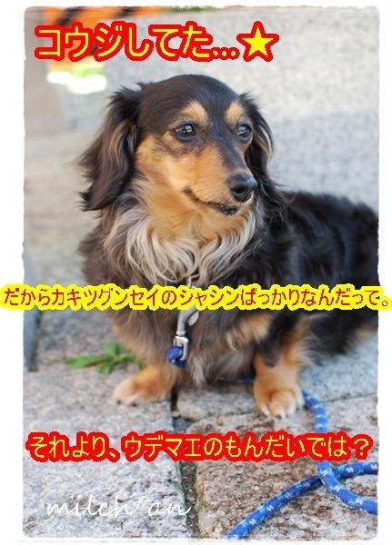 b0115642_16384379.jpg