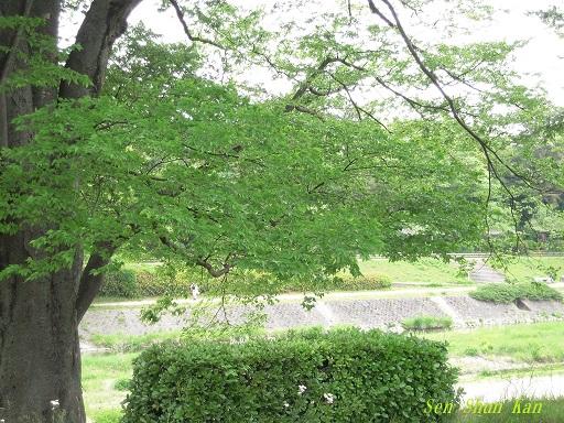 みどりの日 緑の加茂街道_a0164068_221016.jpg