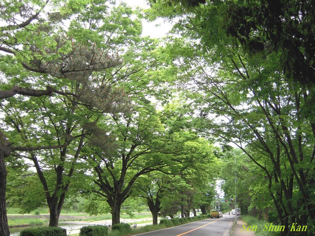 みどりの日 緑の加茂街道_a0164068_22103155.jpg