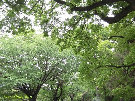 みどりの日 緑の加茂街道_a0164068_2293325.jpg