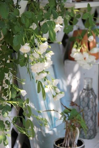 ◆バラと合わせるもの・・・_e0154682_23314198.jpg