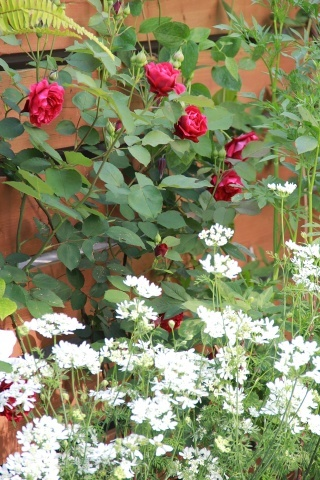 ◆バラと合わせるもの・・・_e0154682_23321601.jpg