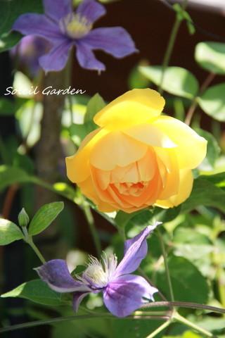 ◆バラと合わせるもの・・・_e0154682_23345599.jpg