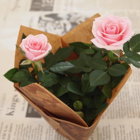 バラ祭りでしょうか?_a0292194_21254446.jpg