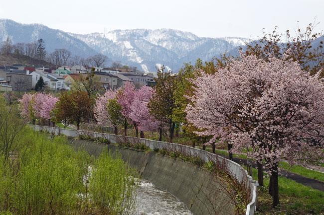 桜_d0162994_9125081.jpg