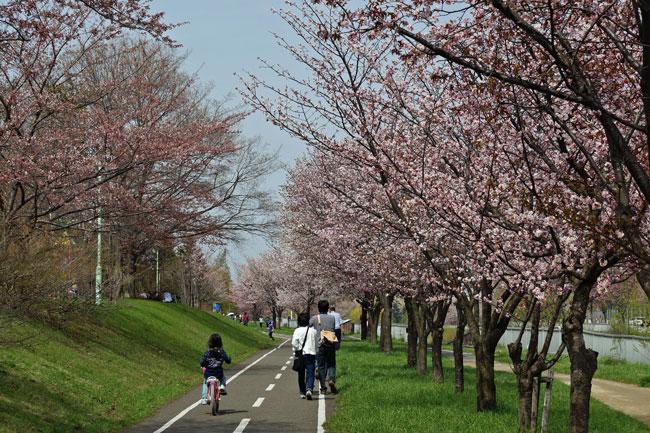 桜_d0162994_9173543.jpg