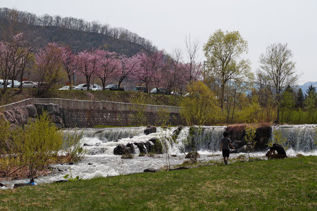 桜_d0162994_941186.jpg