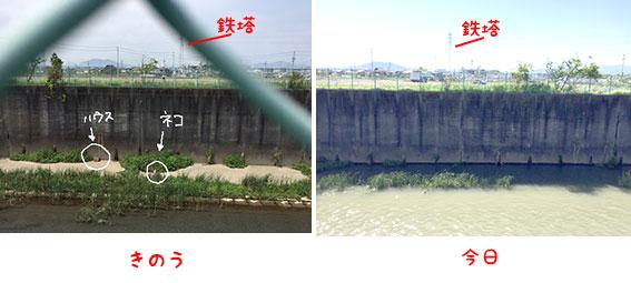 今日の〇〇川放水路とたっくんのこと_d0071596_17584684.jpg