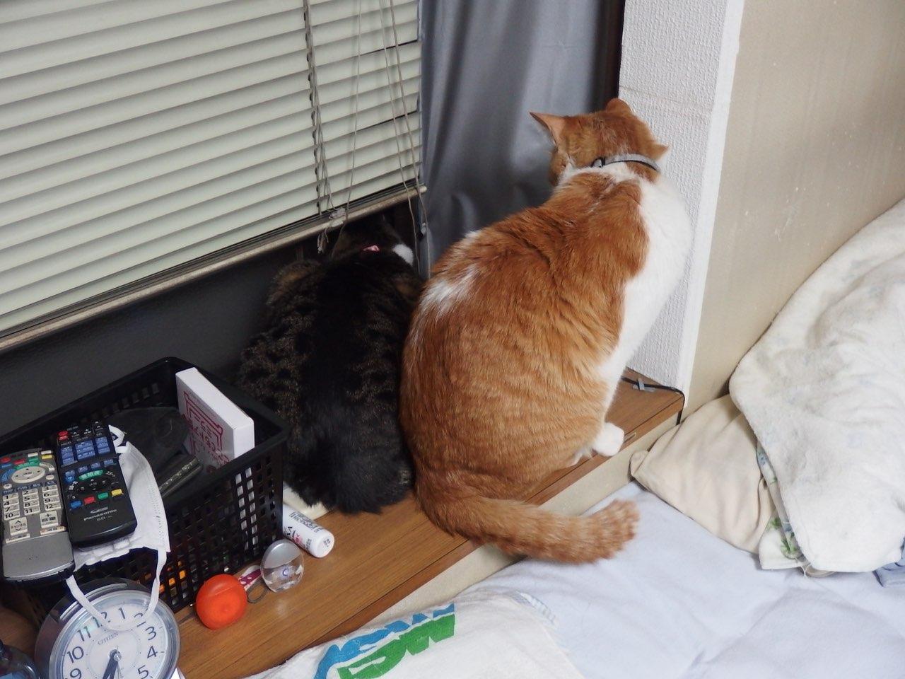 【猫】2匹の距離・・_f0141609_2193394.jpg