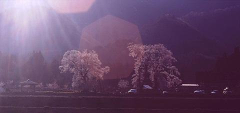 一本桜を巡りて_a0072620_15225316.jpg