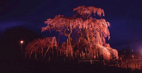 一本桜を巡りて_a0072620_15272739.jpg
