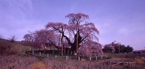 一本桜を巡りて_a0072620_1528289.jpg