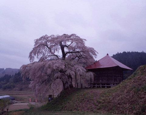 一本桜を巡りて_a0072620_1584987.jpg