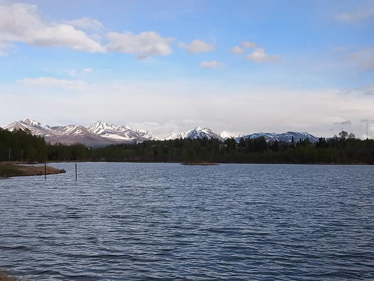 キョクジサシ Arctic Tern_b0135948_1525177.jpg