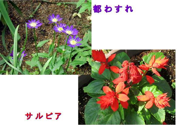 f0003174_1354229.jpg