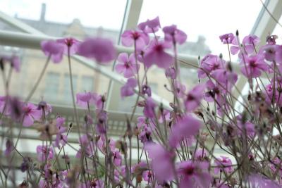フィンランド・エストニアの旅【6】植物園編 _b0102217_1617314.jpg