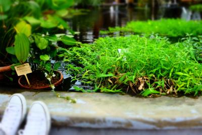 フィンランド・エストニアの旅【6】植物園編 _b0102217_16173155.jpg