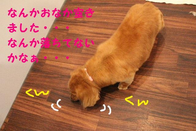 b0130018_17494619.jpg