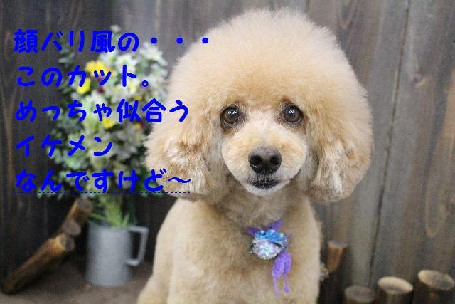 b0130018_1755181.jpg