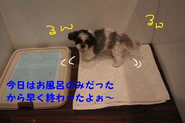 b0130018_1805497.jpg