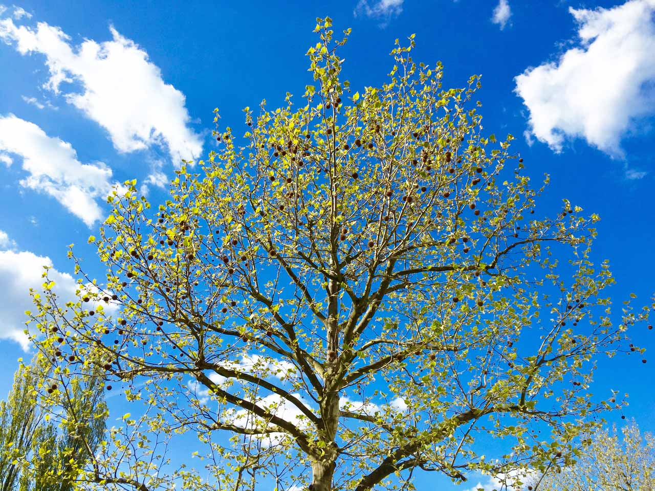 「春」という名前の書体_e0175918_3534231.jpg