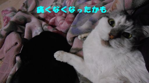 e0142430_2563241.jpg