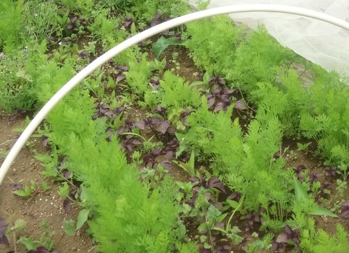 ジャガイモの初収穫.._b0137932_19325075.jpg
