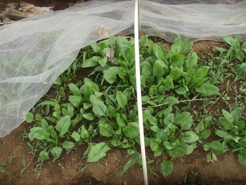 ジャガイモの初収穫.._b0137932_19353223.jpg