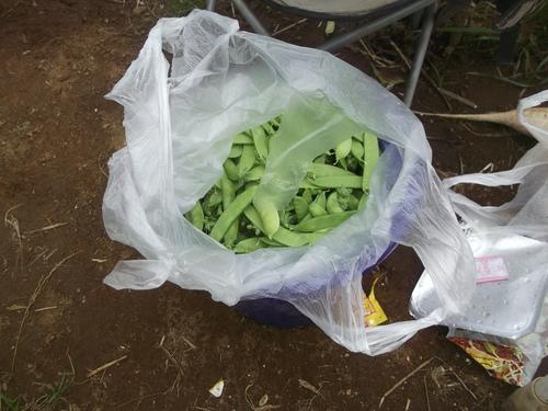 ジャガイモの初収穫.._b0137932_1936676.jpg