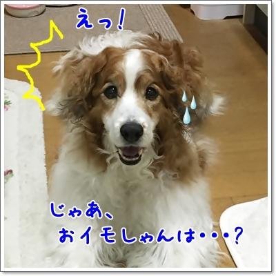 d0013149_00244336.jpg