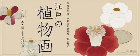 「江戸の植物画」 京都文化博物館_c0133854_21394167.jpg