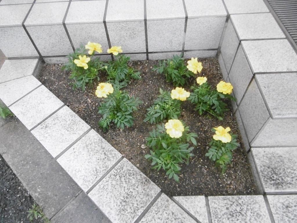 小さな花壇_f0205367_18541341.jpg