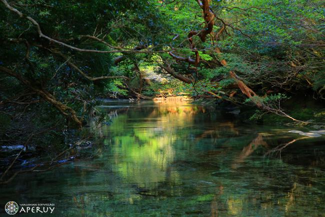自然大好き♪_f0252883_15493057.jpg