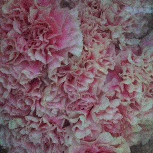 母の日の花達、仕入ほぼ終了〜  4:30amだけど_a0115684_04355112.jpg