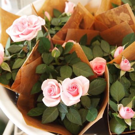 バラ祭りでしょうか?_a0292194_20534210.jpg