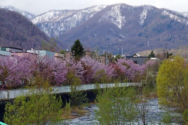 桜・・・3_d0162994_9105942.jpg